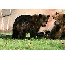 Grizzly Sibblings Photographic Print