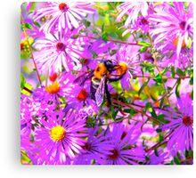 Bumble Bee Bopp Flower Colour Canvas Print