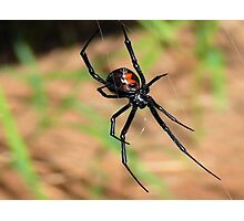 A  Widow     ( Black Widow Series ) Photographic Print
