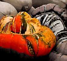 Turban Squash by sundawg7