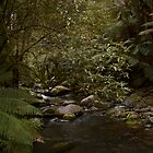 Erskine River, Lorne, Australia by haymelter