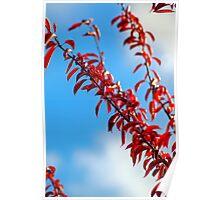 Red leaf blue sky Poster