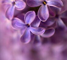 Closeup of fresh lilac by JBlaminsky