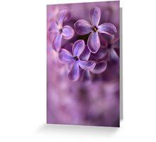Closeup of fresh lilac Greeting Card