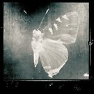 butterfly by gina1881996