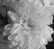White Bloom (Balck And White) by Terri-Leigh Stockdale