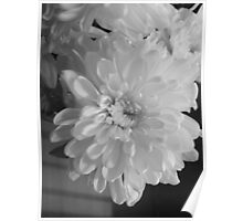 White Bloom (Balck And White) Poster