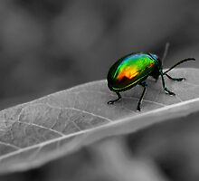 Colorful Bug by Gaby Swanson  Photography