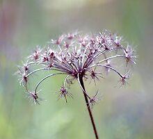 Pastels & Lace by Karen Boyd