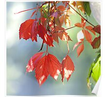 Autumnal Contrasts Poster