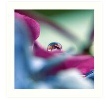 A Drop of colour Art Print