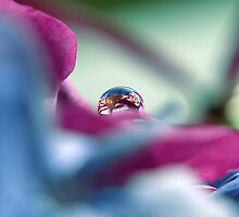 A Drop of colour by Karen Boyd