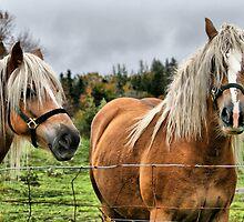 Clementsport Horses by HighHeadArtwork