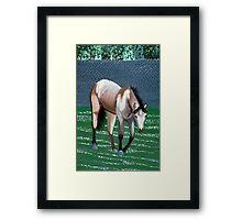 Buckskin Quarter Horse Portrait Framed Print