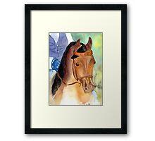 Arabian Saddleseat Horse Portrait Framed Print