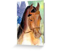 Arabian Saddleseat Horse Portrait Greeting Card