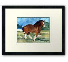 Clydesdale Horse Portrait Framed Print