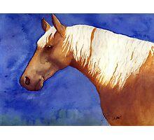 Palomino Quarter Horse Portrait Photographic Print
