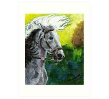 Spanish Barb Horse Portrait Art Print