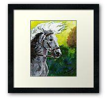 Spanish Barb Horse Portrait Framed Print