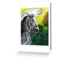Spanish Barb Horse Portrait Greeting Card