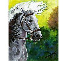Spanish Barb Horse Portrait Photographic Print