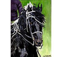 Freisian Horse Portrait Photographic Print
