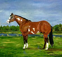 Paint Halter Horse Portrait by Oldetimemercan