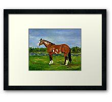 Paint Halter Horse Portrait Framed Print