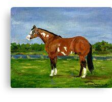 Paint Halter Horse Portrait Canvas Print