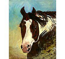 Paint Halter Horse Headshot Portrait Photographic Print