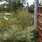 Farm Fence by Janet Rymal