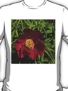 Deep Red Peony With Bright Yellow Stamens  T-Shirt