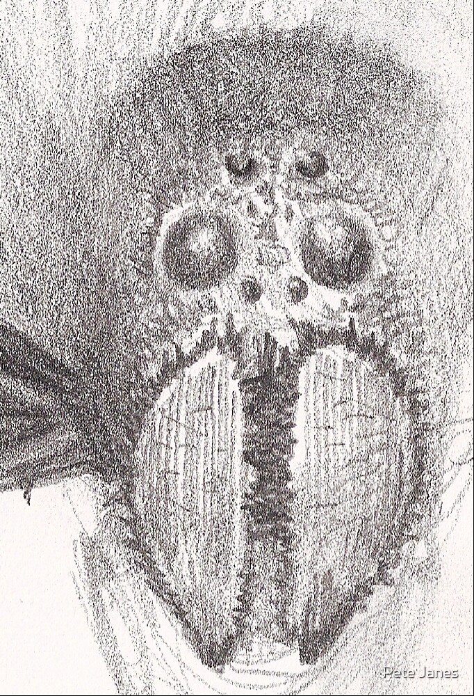 Spider Face by Pete Janes