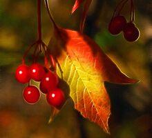 Autumn Delight by Bill Morgenstern