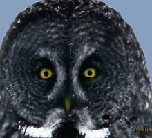 The Eyes of an Owl by Pam Moore