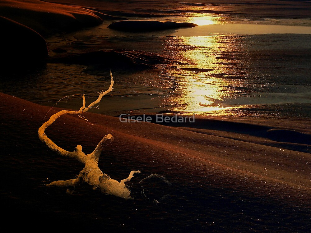 Red morning by Gisele Bedard