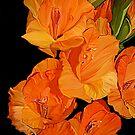 Orange Gladioli... by Patriciakb
