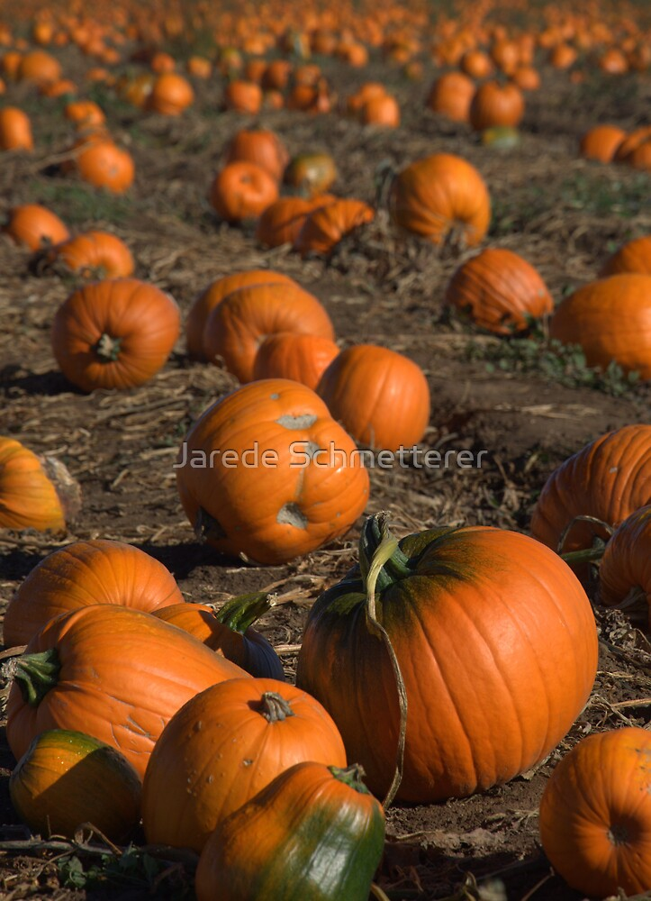 Pumpkin Patch by Jarede Schmetterer