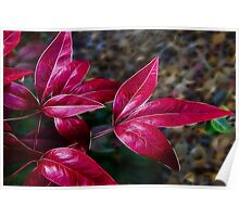 Autumn Leave Red Poster