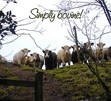 Simply bovine! Photo of cows. by graphicdoodles