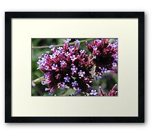 Tiny Purple Flowers Framed Print