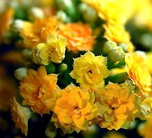 Tiny Yellow Flowers by bloomingvine