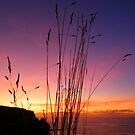 Cornwall: Evening Grasses by Rob Parsons