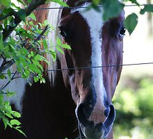 Nibbling the fence wire...Flossing?  by Ruth Lambert