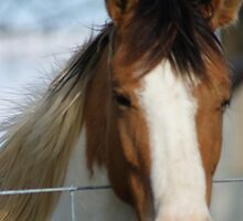 Lil filly... by Ruth Lambert