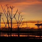 Tranquil Devonian Sunset by bared