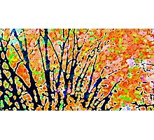 Turning Leaves Photographic Print