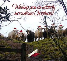 Christmas cows wearing Santa Hats! by graphicdoodles