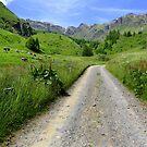Viso Valley  by annalisa bianchetti